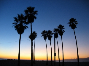 1345669_sunset_in_venice_beach.jpg